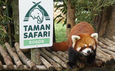5 Fakta Taman Safari Bogor, Yang Terakhir Bikin Merinding